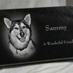 Laser Etched Pet Markers in Grand Rapids MI
